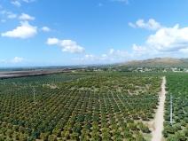 Mango View